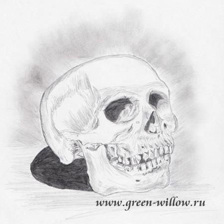 Череп, рисунок карандашом