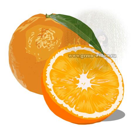 как нарисовать апельсин